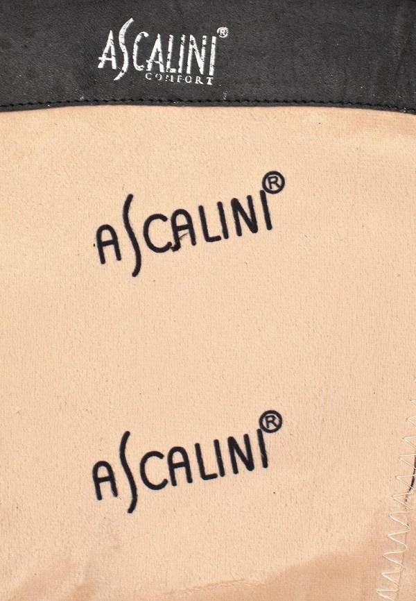 Женские сапоги Ascalini C14075: изображение 12