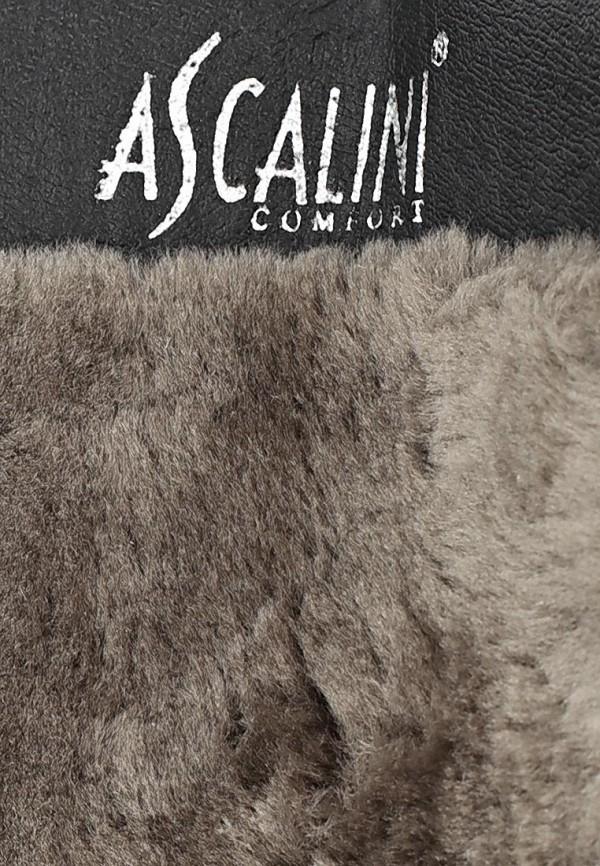 Женские сапоги Ascalini CZ7976BF: изображение 12